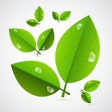 Hojas del verde del vector aisladas en el fondo blanco Imagen de archivo libre de regalías