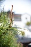 Hojas del verde después de la lluvia Foto de archivo libre de regalías