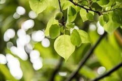 Hojas del verde después de la lluvia Imagen de archivo libre de regalías