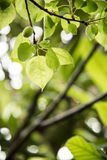 Hojas del verde después de la lluvia Imágenes de archivo libres de regalías