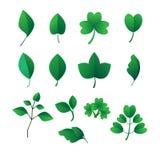 Hojas del verde - ejemplo Foto de archivo libre de regalías