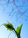 Hojas del verde en caída Fotos de archivo