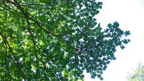 Hojas del verde en día asoleado Fotos de archivo