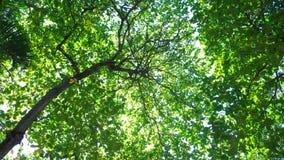 Hojas del verde en día asoleado Fotos de archivo libres de regalías