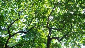 Hojas del verde en día asoleado Imagenes de archivo