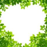 Hojas del verde en dimensión de una variable del corazón en blanco imágenes de archivo libres de regalías