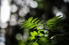 Hojas del verde en el bosque Imagenes de archivo