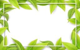 Hojas del verde en el fondo blanco Lugar para el texto imagen de archivo