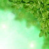 Hojas del verde en fondo borroso imágenes de archivo libres de regalías