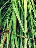 Hojas del verde en el jardín foto de archivo libre de regalías