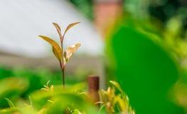 Hojas del verde en el jardín Imagen de archivo libre de regalías