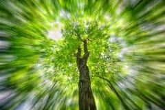 Hojas del verde en el movimiento Fotos de archivo libres de regalías