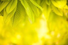 Hojas del verde en fondo amarillo fotografía de archivo libre de regalías