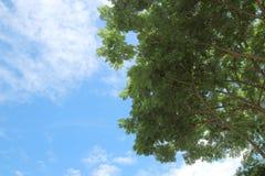 Hojas del verde en fondo del cielo azul Foto de archivo libre de regalías