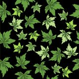 Hojas del verde en fondo negro. Inconsútil. Fotos de archivo libres de regalías