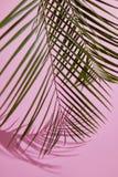 Hojas del verde en fondo rosado Imágenes de archivo libres de regalías