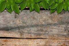 Hojas del verde en la madera Imagen de archivo