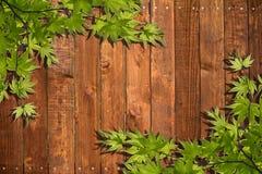 Hojas del verde en la madera Fotografía de archivo