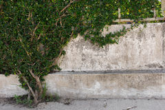 Hojas del verde en la pared Fotografía de archivo