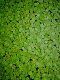 Hojas del verde en los fondos verdes Imagen de archivo libre de regalías