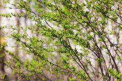 Hojas del verde en primavera Fotografía de archivo libre de regalías