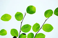 Hojas del verde en primavera Imagen de archivo