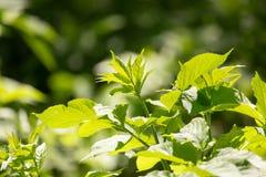 Hojas del verde en un árbol Imágenes de archivo libres de regalías