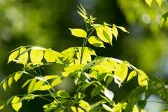 Hojas del verde en un árbol Foto de archivo