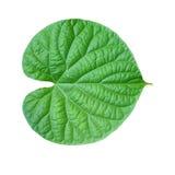 Hojas del verde en un fondo blanco Imagen de archivo
