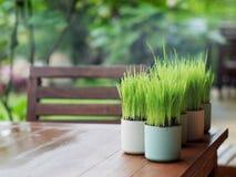 Hojas del verde en una taza Foto de archivo