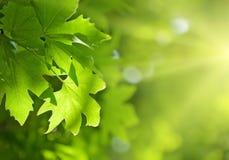 Hojas del verde, foco bajo Imagen de archivo