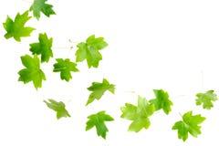Hojas del verde que caen Imagen de archivo libre de regalías