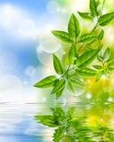 Hojas del verde que reflejan en agua Fotografía de archivo libre de regalías