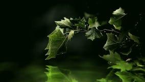 Hojas del verde sobre el agua Imagenes de archivo