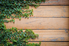 Hojas del verde sobre la textura de madera del tablón Fotografía de archivo