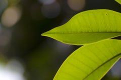 Hojas del verde usadas como fondo Fotos de archivo
