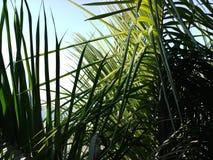 Hojas del verde y cielo azul Imagenes de archivo