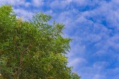 Hojas del verde y cielo claro Fotos de archivo