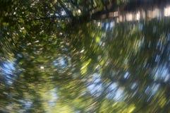 Hojas del verde y extracto del cielo Fotos de archivo