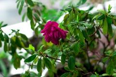 Hojas del verde y flor púrpura Fotos de archivo