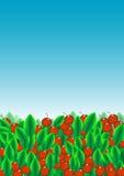 Hojas del verde y fruta roja Imagenes de archivo