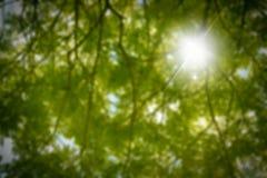 Hojas del verde y rama borrosas del árbol con luz del sol del s Fotografía de archivo