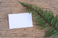 Hojas del verde y tarjeta en blanco Foto de archivo libre de regalías