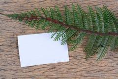 Hojas del verde y tarjeta en blanco Fotografía de archivo libre de regalías
