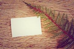 Hojas del verde y tarjeta en blanco Imagen de archivo