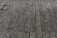Hojas descoloradas del sicómoro en las baldosas de madera fotografía de archivo