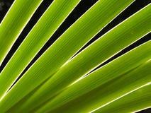 Hojas diagonales Foto de archivo