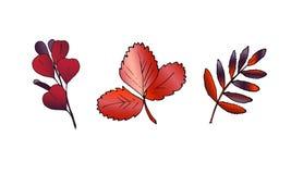 Hojas dibujadas mano del color del otoño del vector fijadas stock de ilustración