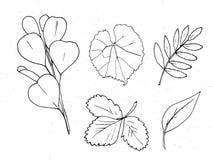 Hojas dibujadas mano del monocromo del otoño del vector fijadas libre illustration