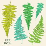 Hojas dibujadas mano verde fresca del helecho aisladas en el fondo blanco Imagen de archivo